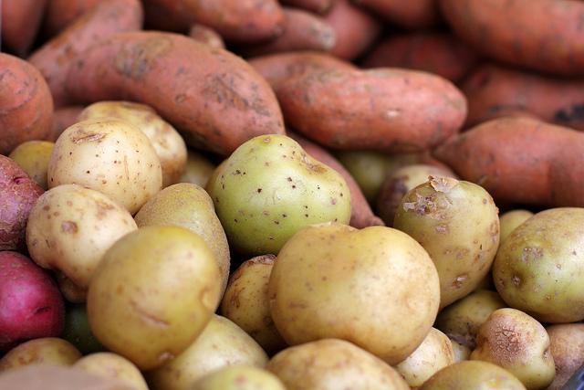 فرق سیب زمینی شیرین معمولی