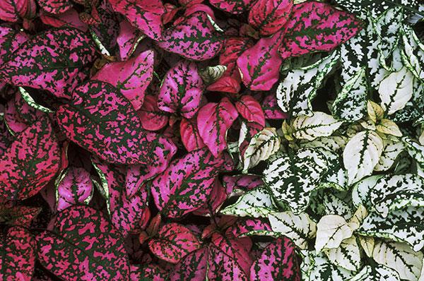 گیاهان سازگار با تراریوم