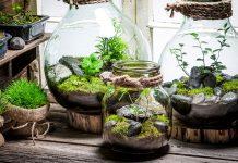 گیاهان آپارتمانی مخصوص تراریوم