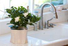 گیاهان آپارتمانی مخصوص آشپزخانه