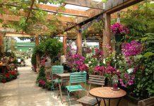 گیاهان مناسب رستوران