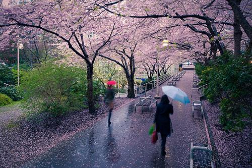 انشا ادبی و احساسی در مورد باران