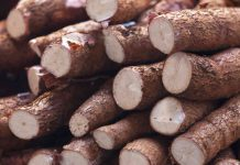 خواص ریشه مانیوک یا کاساوا