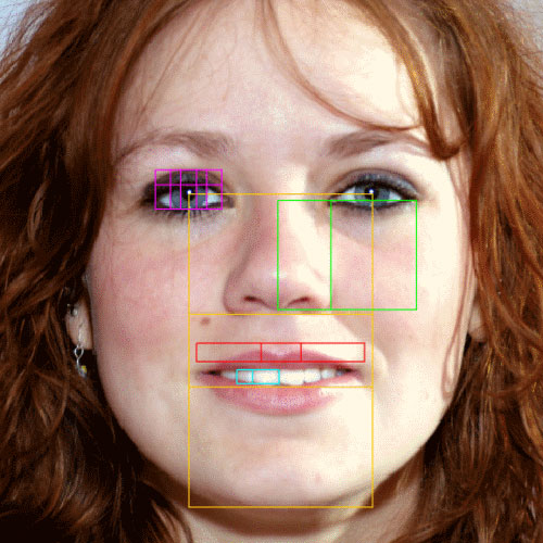 نسبت طلایی در چهره