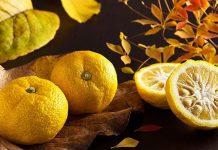 فواید میوه یوزو