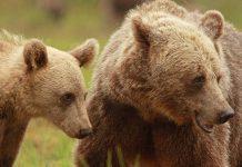 اطلاعات خواندنی در مورد خرس ها