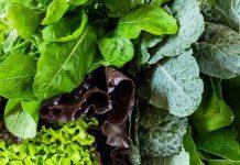 فواید و نام انواع سبزیجات سبز رنگ تیره