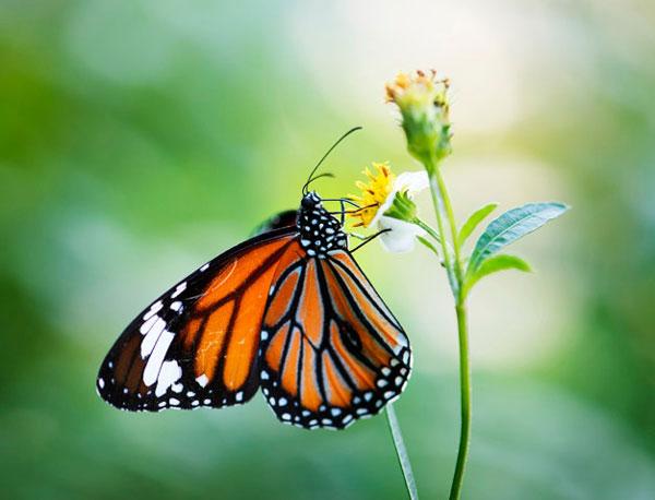 گفتگوی خیالی میان گل و پروانه