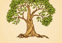 انشا راجب درختی که پا در هواست