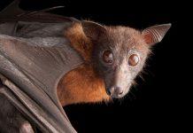 در مورد خفاش ها چه می دانید؟