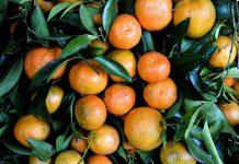 فرق نارنگی و یافا چیست؟