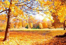 علت برگ ریزان درختان پاییزی