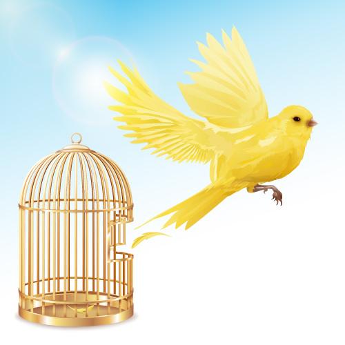 معنی ضرب المثل مرغ از قفس پرید