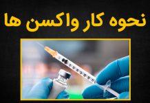 واکسن ها چگونه عمل می کنند؟