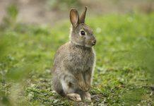 تحقیق درباره زندگی خرگوش ها