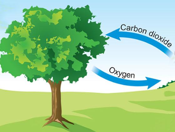 نحوه تبدیل دی اکسید کربن به اکسیژن