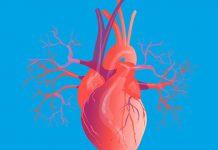 تحقیق کوتاه در مورد قلب انسان